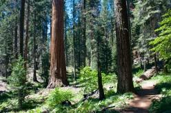 Hiking among giants