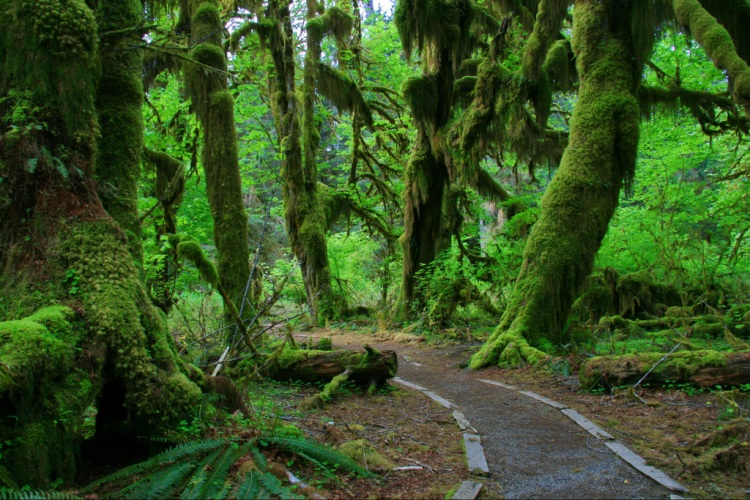 Hall-of-Mosses